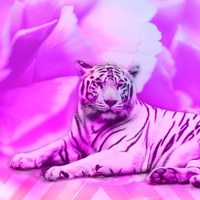 """Pink Tiger Dream"" - Digital Art Print by Acacia Carr, Copyright 2018. All rights reserved."